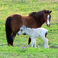 Bertha and foal