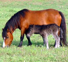 Petey and foal