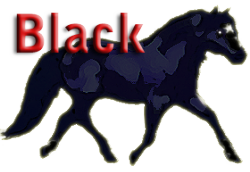 Black Color in Miniature Horses