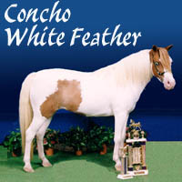 Concho White Feather